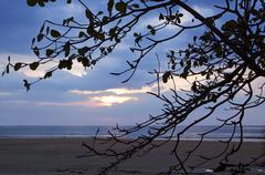 silhouette tree and sea sunset at naiyang beach thailand - stock photo