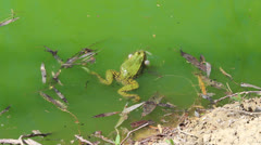 green frog - stock footage