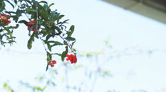 Red flower Stock Footage