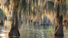 Louisiana bayou at sunset Stock Footage