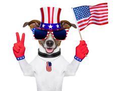 Stock Photo of usa american dog