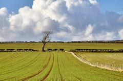 Pastoral scene in English Countryside - stock photo