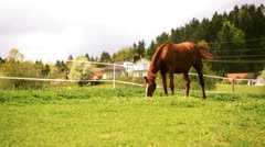 Brown Horse grazing on protected lawn Stock Footage