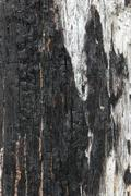 fire wood texture - stock photo