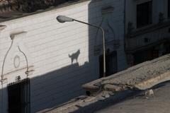 Barking koiran varjo katolla Kuvituskuvat