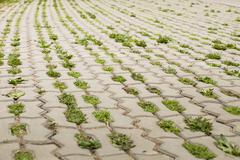 pavers with grass - stock photo