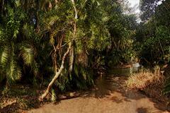 3d tropical forest river image Stock Illustration