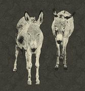 Two donkeys drawing Stock Illustration