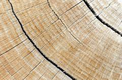 hardwood log - stock photo