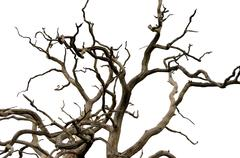 Twisted Tree - stock photo