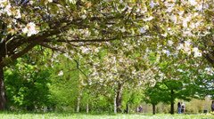 People in the spring park Stock Footage