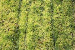 mossy grass - stock photo
