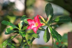 Mock azalea beautiful red flowers Stock Photos