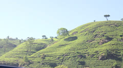 Tea plantation in Nuwara Eliya,Ceylon. Stock Footage