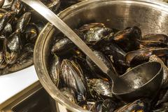Cooker with stewed mussels Stock Photos