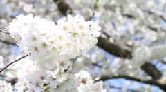 Spring Tree's Blooming Flowers Stock Footage