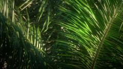 Jungle Early Morning Light Stock Footage