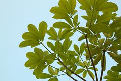 leaf canopy. - stock photo