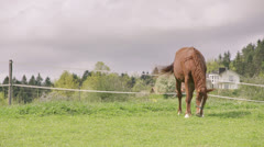 Wide shot of horse grazing on field fast motion Stock Footage