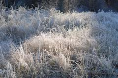 Hoar frost Stock Photos