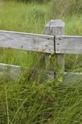 wooden fence in overgrown field - stock photo