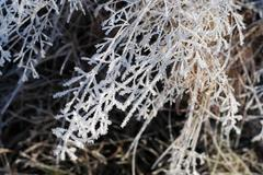 hoar frost - stock photo