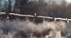 barbed wire aginst the light - stock photo