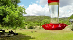 Hummingbird in slow motion Stock Footage