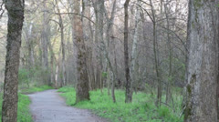 Path in the woods Stock Footage