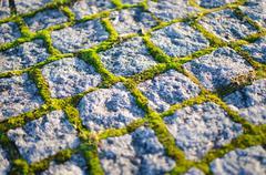 Cobblestones with moss Stock Photos
