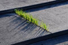 Grass and Concrete - stock photo