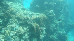 View of Sea Floor from Glass Bottom Boat Stock Footage