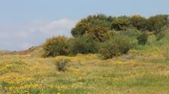 Idyllic spring meadow panorama Stock Footage