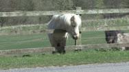 Small pony, head through fence grazes Stock Footage