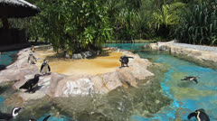 Penguins swim and play in Singapore Bird Park - stock footage