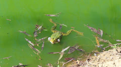 Green frog Stock Footage