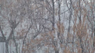 Stock Video Footage of Traffic on a Snowy Day, Snow Fall on the Road, Winter Scene, View