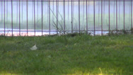 Disinfection in Park, Cleaning against Pest Insects, Parasite, Ticks, Hoppers Stock Footage