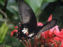 Butterfly Black Stock Photos