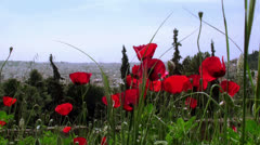 Red poppies on a background of Athens Stock Footage