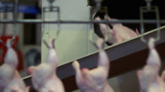 Chicken carcasses on the production line Stock Footage