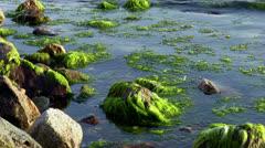 Mossy rocks Stock Footage