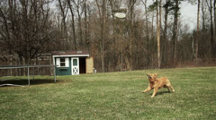 Dog Catching Frisbee - Super Slow Motion Stock Footage