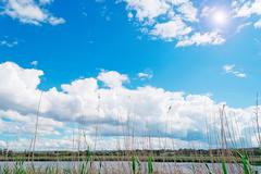 clouds and reeds - stock photo