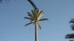 Fake Palm Tree cellphone tower Stock Footage