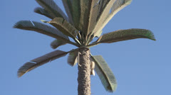 Fake Palm Tree cell phone tower Stock Footage