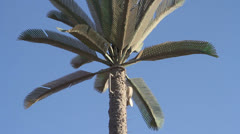 Cell phone tower disguised as a palm tree Stock Footage