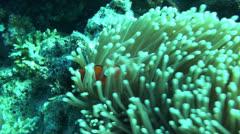 Nemo Stock Footage