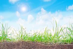 Grass and sun Stock Photos
