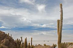 Cardon cactus at isla de pescador, bolivia Stock Photos